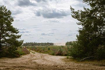 Paarse heide in natuurgebied in Oirschot van Angela Kiemeneij