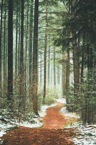 Het pad het bos in.