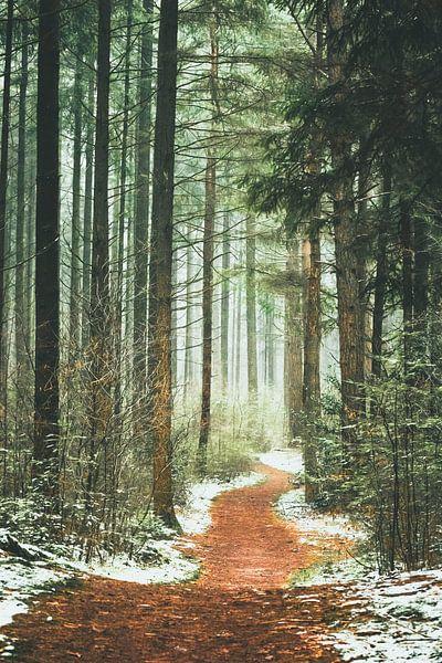 Het pad het bos in. van Karel Pops