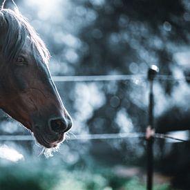paard portret Pferdeporträt von Thilo Wagner