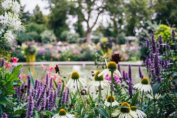 Sommerblumengarten von Patrycja Polechonska