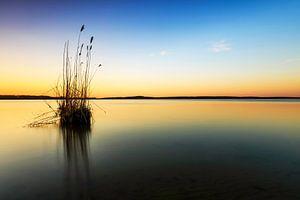 Une touffe d'herbe dans le lac