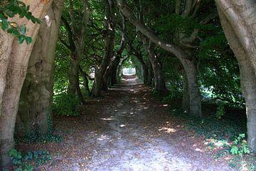 Tunnel van bomen van Merijn Loch