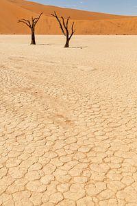 Dead Vlei in Namibië, Afrika van