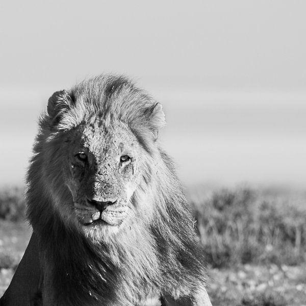 De leeuw van Sharing Wildlife