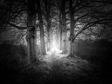 Volg het licht van Frank Wijsmuller