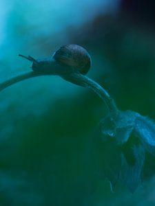 Slak op Wildemanskruid bloem