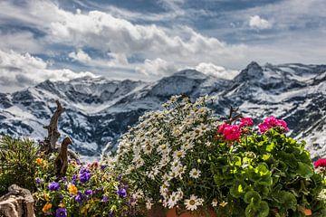 Alpenlandschaft mit Blumen von Martine Dignef