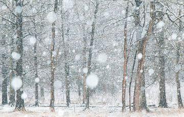 Bomen in de sneeuw van Ellis Pellegrom