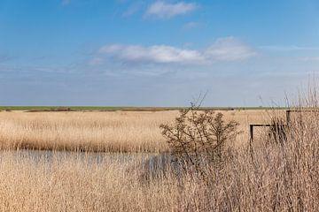 Oost-Friesland - Krummhörn - Landschap van Nicole Frischlich