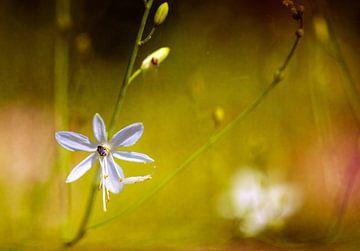Sommerblume von Marijke van Loon