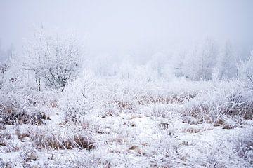 Winterwunderland auf der Heide von Karijn Seldam