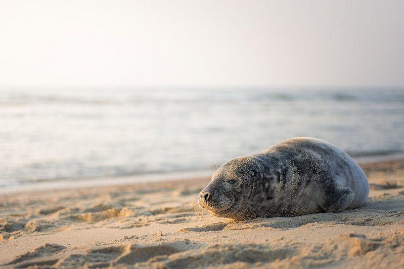 Phoque sur la plage sur Thom Brouwer