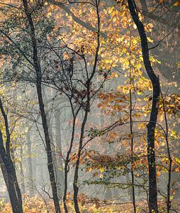 Into the Trees van Johanna Blankenstein