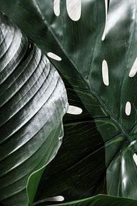 Jungle van Emma Groenenboom