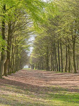 Doorkijk in het bos, Heiloo-Nijenburg