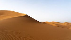 Sahara °9 sur Jesse Barendregt