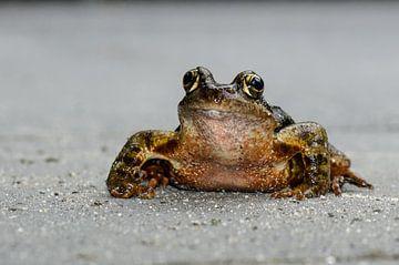 Kermit de kikker van Marcel Pietersen