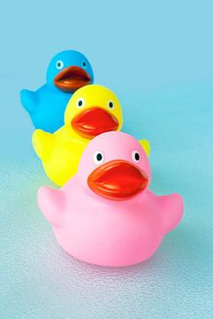 Drei farbige Enten von Andrea Loot