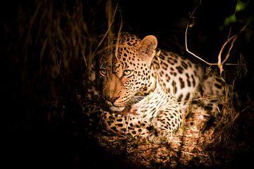 Luipaard - prins van de nacht von Lotje Hondius