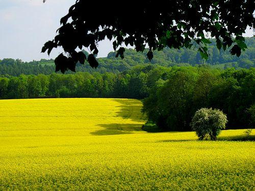Belgian Spring van