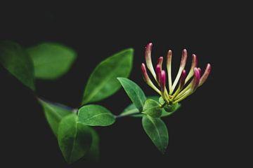 Blumen-Kunst von Photos by Francis