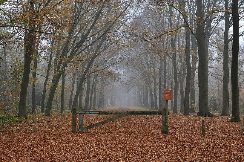 Foggy Forest van Wiljo van Essen