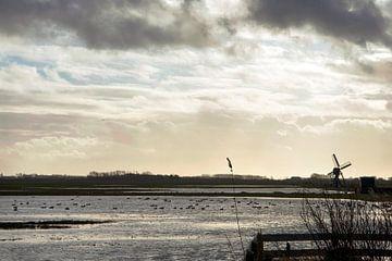 meertje met molen op Texel van Hanneke Luit