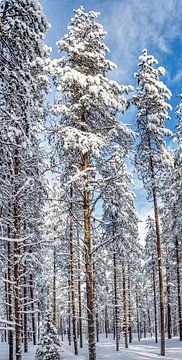Hoge bomen in Fins bos van Rietje Bulthuis