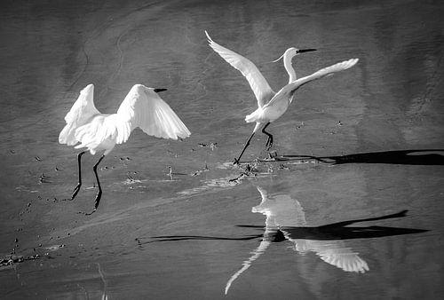 Vogelvlucht van Emil Golshani