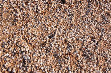Schelpen op het strand van Barbara Brolsma