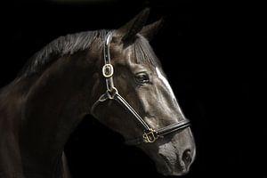 Paardenportret in zwart