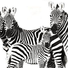 Zebra Familie van Roland Smeets