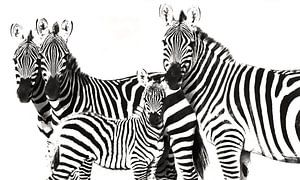 Zebra Famely von Roland Smeets