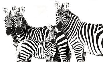 Zebra Familie von Roland Smeets