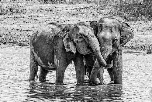 Elefanten umarmen sich von Imca van de Weem