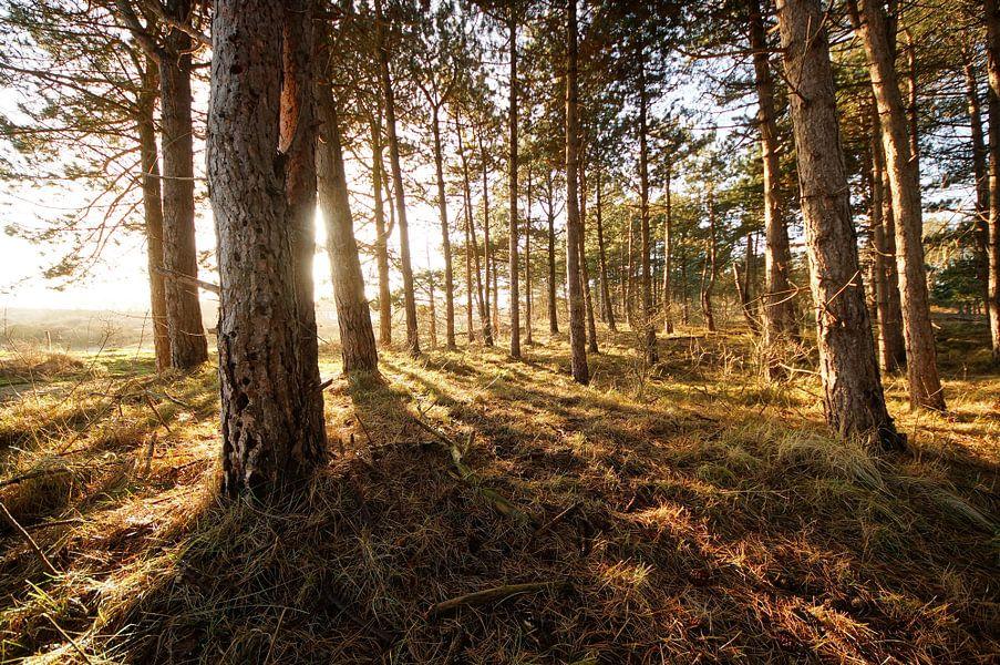 bomen op een zonnige dag van Dirk van Egmond