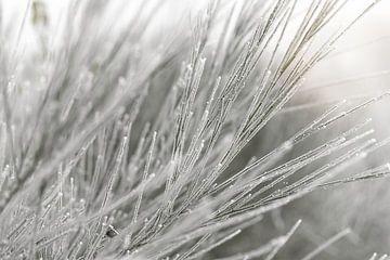 Brem in een wit winters landschap van Sandra Koppenhöfer