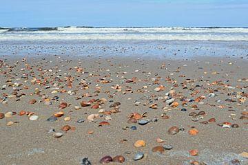 Schelpen op het strand van Judith Cool
