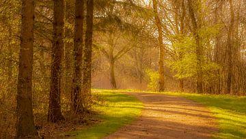 Zonnestralen over een bospad. von Remco Piet