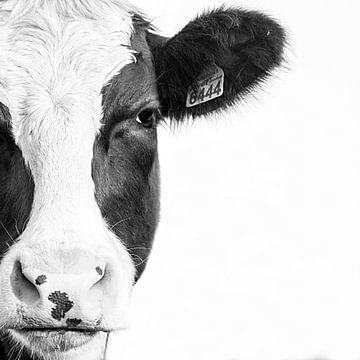 Koe portret in zwart wit van