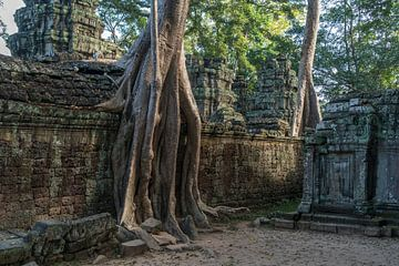Ruines du temple de Ta Phrom, région d'Angkor, Cambodge sur Peter Schickert