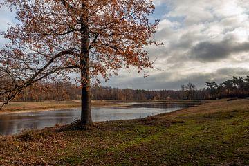 Sfeervolle plaat van een meer in het herfstseizoen van Ruud Morijn