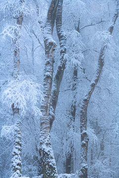Winterse ochtend met sneeuw in het Vijlnerbos in Zuid-Limburg van Jos Pannekoek