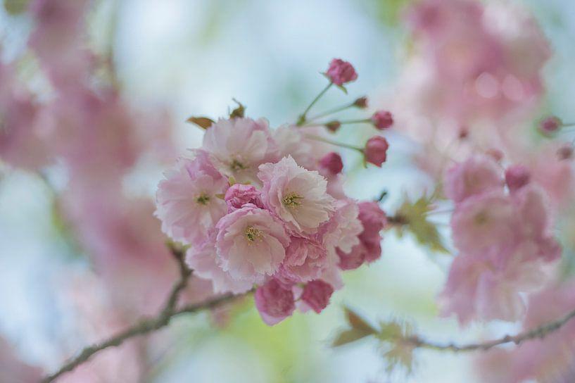 lente bloesem van gj heinhuis