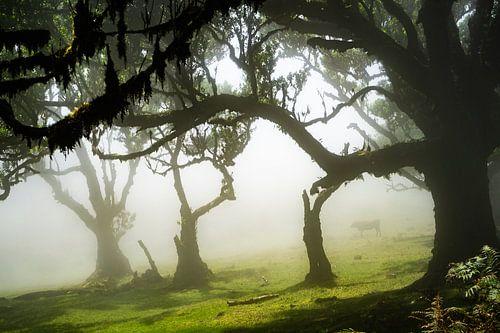 Bomen op Madeira van