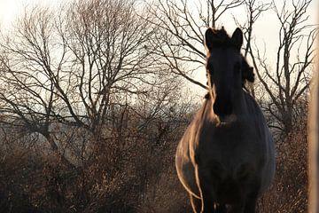Paard van Lis Zandbergen