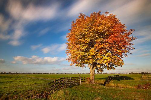 Herfst in de Alblasserwaard van