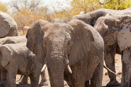 Groep olifanten close up in Namibië van Simone Janssen