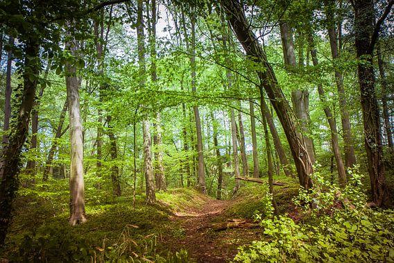 Pad door het bos van Wim van D